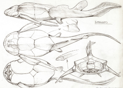 BOTHRIOLEPIS STUDY - Pencil - 2008 - Scientific supervisors Cristiano Dal Sasso and Simone Maganuco