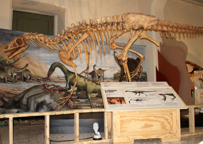 """SPINOSAURUS: Lost Giant of Cretaceous"" - Traveling Exhibition"