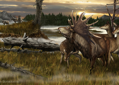 "MEGALOCEROS - ""Dinosaurs in the Flesh"" traveling exhibition - Tempera and Digital - 2012 - Scientific supervisor: Simone Maganuco"