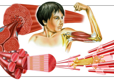 "MUSCLES - Airbrush and Digital 2001 – ""Der Korper"", Tessloff"