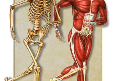 "BONE AND MUSCLE - Tempera and Airbrush 2001 – ""Der Korper"", Tessloff"