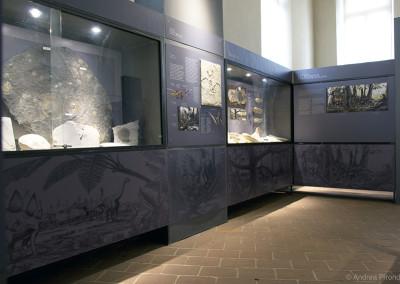 MUSEO GEOLOGICO G. CORTESI (Castell'Arquato - PC)